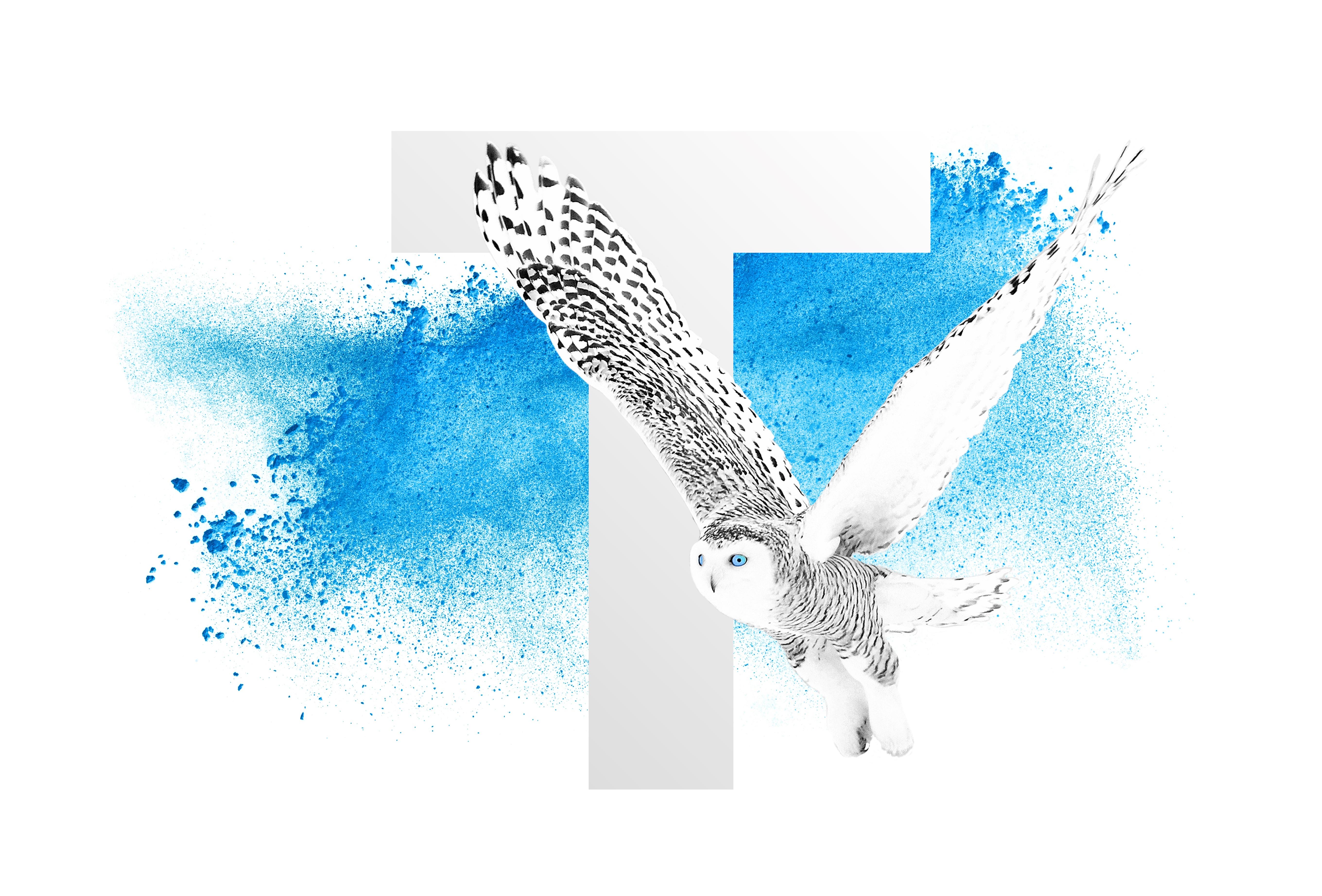 Owl_in_flight (1)-2