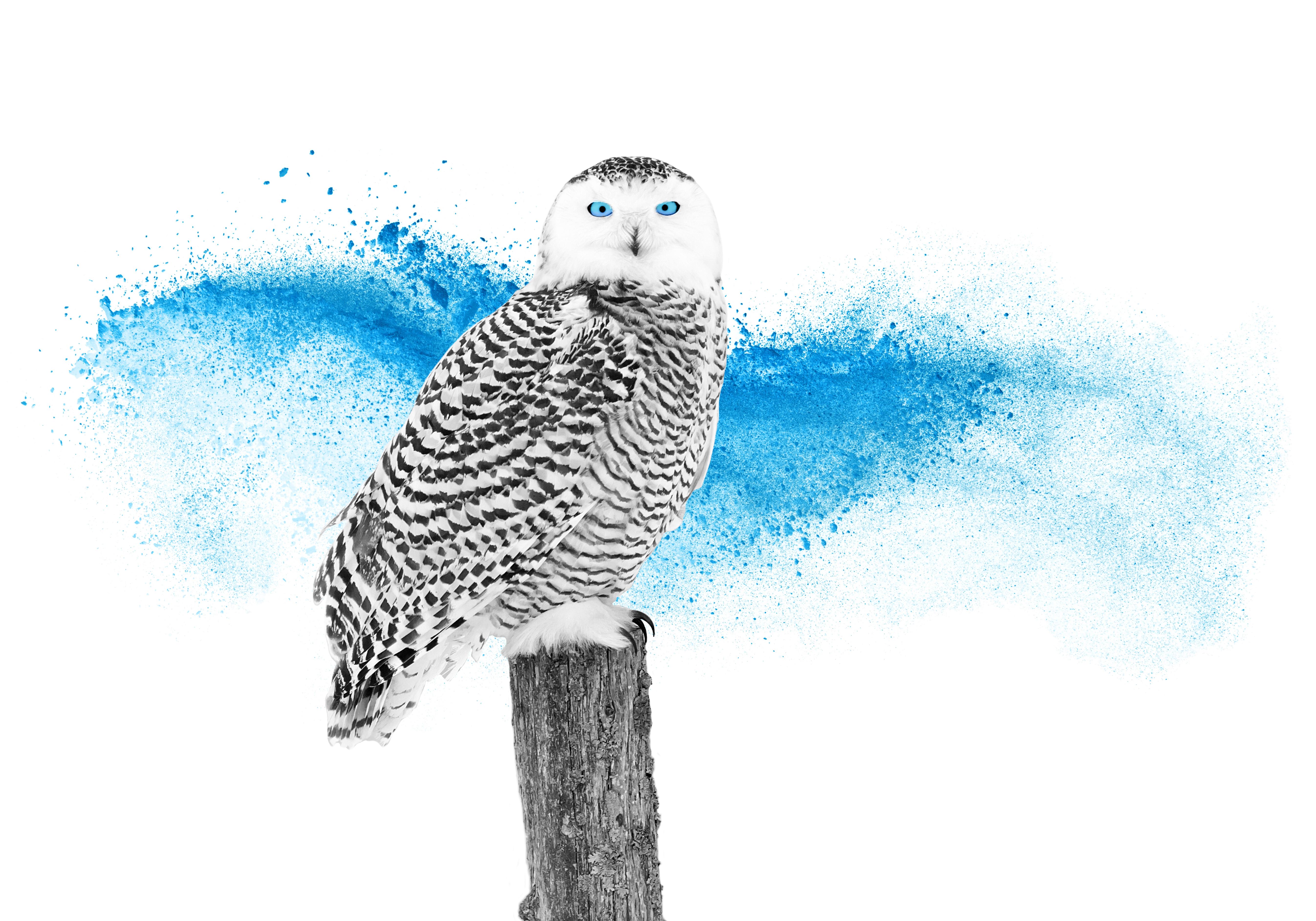 Owl_on_post_NoT-1